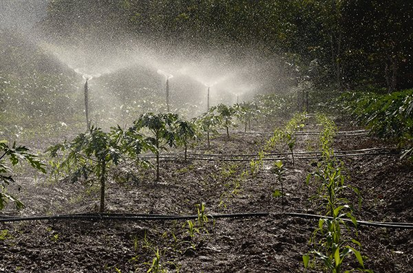 be grateful | water system farm
