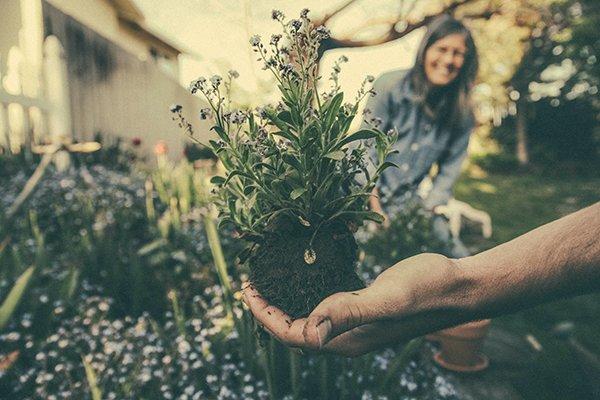 appreciation | plant in soil