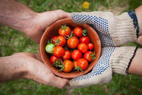 generosity | handing bowl of tomatoes